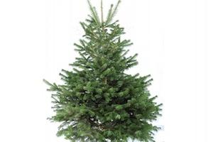 Sapin De Noël Bruxelles Achetez Votre Sapin De Noël